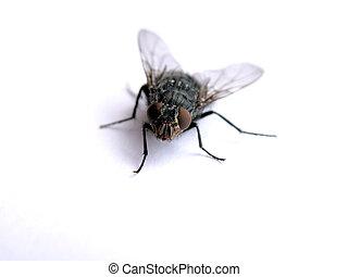 Macro Fliege