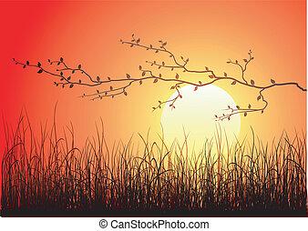 Magic Sonnenuntergang