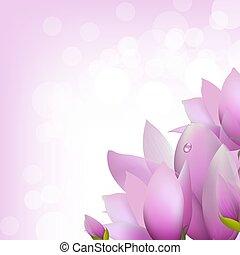 magnolie, bokeh