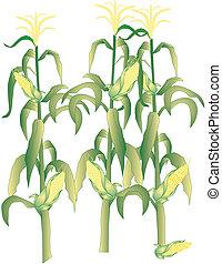 Mais auf dem Spind ist Illustration