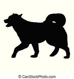 malamute, hund, alaskisch