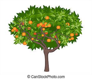 Mandarinbaum
