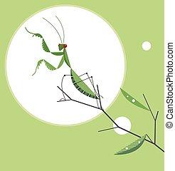 Mantis auf einem Baumzweig.