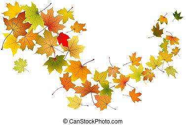 Maple Blätter fallen.