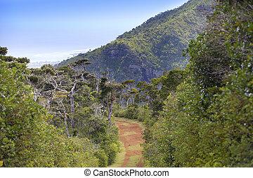 Mauritius. Schwarzer Fluss-Gorgepark. Straße im Wald