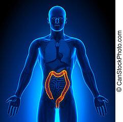 medizin, -, doppelpunkt, imaging, mann, organe