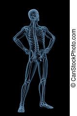medizin, mann, skelett