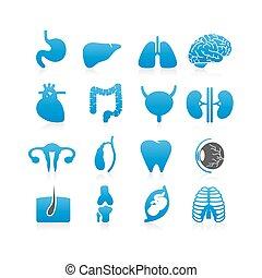 medizin, organe, menschliche , ikone
