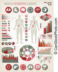 Medizinische Infogramme. Menschlicher Körper mit inneren Organen. Vector.