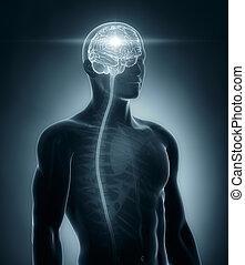 medizinische röntgenaufnahme, gehirn, rückenmark, überfliegen