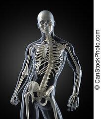 Medizinischer menschlicher Körper