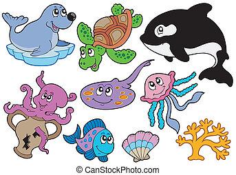 Meeresfische und Tiersammlungen