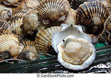 Meeresfrüchte: Muschel