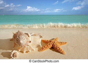 Meeresschalen sternfischen tropischen Sand türkiskaribische.