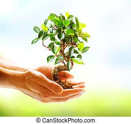 Menschenhände halten grüne Pflanzen über dem Natural