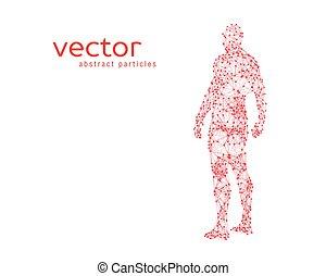 menschliche , abbildung, vektor, koerper