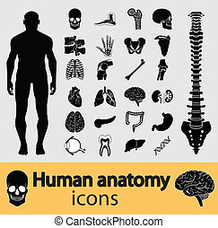 Menschliche Anatomie-Ikonen