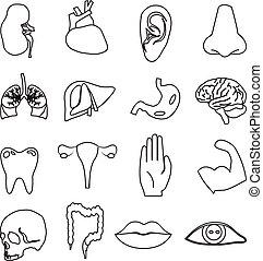 Menschliche Anatomie-Symbole.