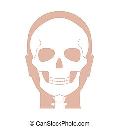 menschliche anatomie, totenschädel