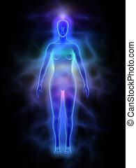 menschliche , frau, -, aura, chakras