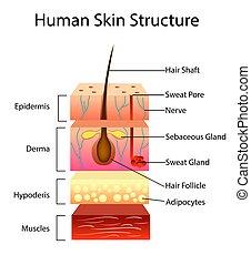 Menschliche Hautstruktur, Vektorgrafik.