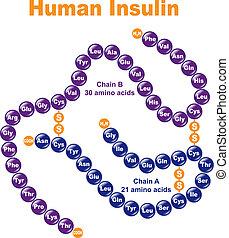 menschliche , insulin.