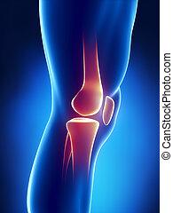 Menschliche Knie detaillierte Sicht