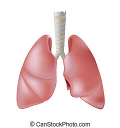 menschliche lunge, eps8