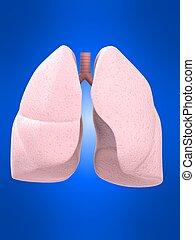 Menschliche Lunge.