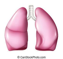 Menschliche Lungen, Vektor.