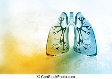 Menschliche Lungen.