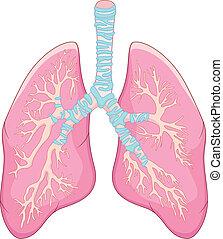 Menschliche Lungenanatomie