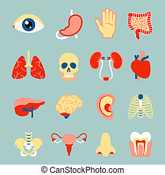 menschliche Organe eingestellt.