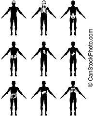 Menschliche Organe in Körper-Ikonen