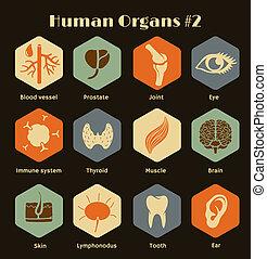 menschliche , satz, organe, systeme, heiligenbilder