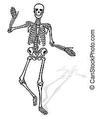 Menschliche Skelettfront