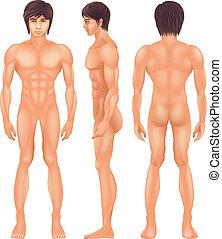 Menschlicher Körper.