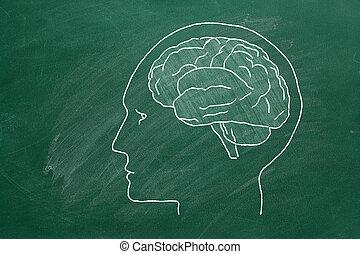 menschlicher kopf, brain.