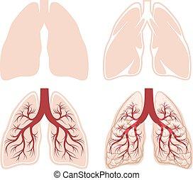 Menschlicher Lungenvektor
