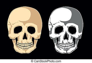 Menschlicher Schädel auf schwarz. Getrennt
