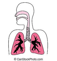 Menschliches Atemsystem-Diagramm