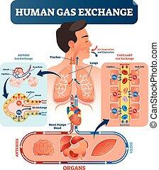 Menschliches Gasaustauschsystem Vektorgrafik. Sauerstoff reist von der Lunge ins Herz, in alle Körperzellen und zurück in die Lunge als CO2.