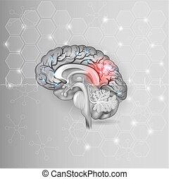 Menschliches Gehirn mit rotem Licht abstrakt hellgrauem Hexagon Hintergrund und normalem Kardiogramm.