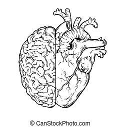 Menschliches Gehirn und Herz - Logik und Emotionen