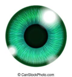 Menschliches grünes Auge