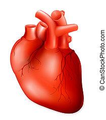 Menschliches Herz, Eps10