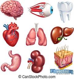 Menschliches Herz, Gehirn, Auge, Zahn, Lunge, Leber, Magen, Niere, Haut. Medizin, innere Organe. 3D-Vektor-Icon eingestellt