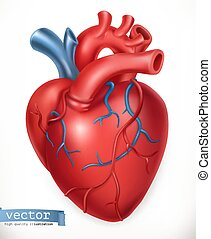 Menschliches Herz. Medizin, innere Organe. 3-D-Vektor-Icon