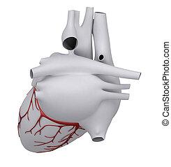 Menschliches Herz mit Herz