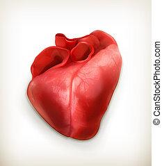 Menschliches Herz, Vektor